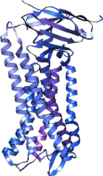 opioid receptor,опиоидный рецептор