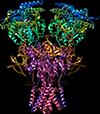 NMDA рецептор, nmda receptor