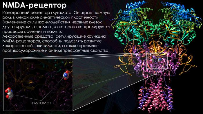 nmda-рецептор