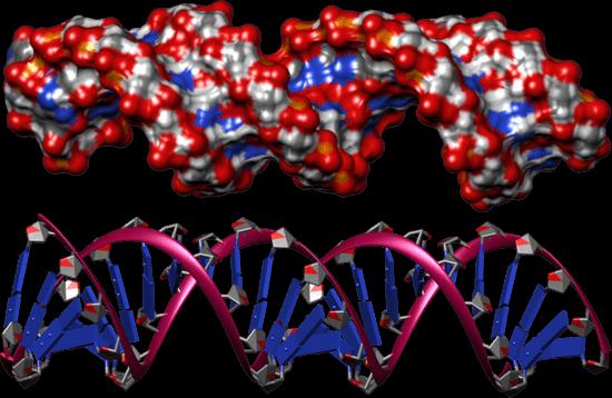 nucleic acid, нуклеиновые кислоты, днк, рнк