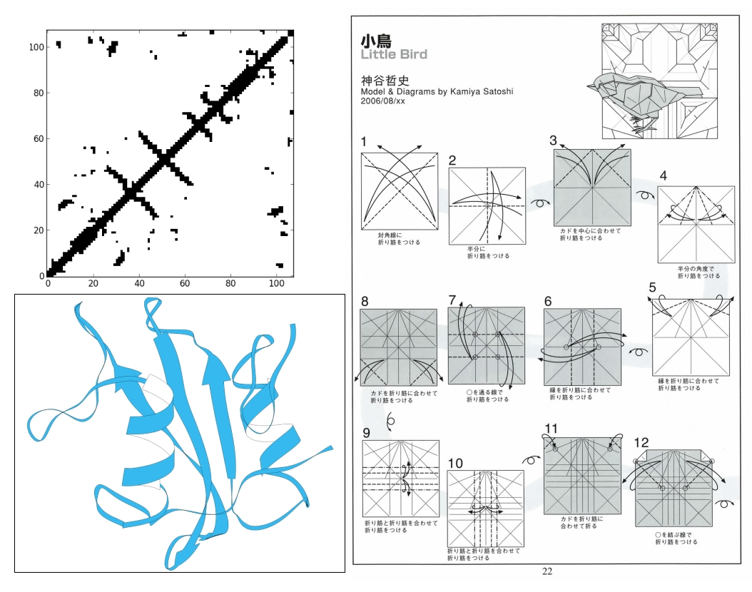 sh2 domain, crease pattern, protein contact map