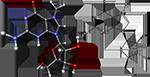 метилгуанозин, синтез белка картинки