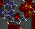гуанозинтрифосфат, синтез белка картинки