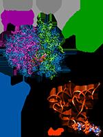 Комплекс 80S рибосома-мРНК-тРНК клетки дрожжей,синтез белка картинки