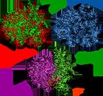 Рибосомные белки и рибосомная РНК,синтез белка картинки
