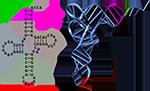 узнавание тРНК аминоацил-тРНК-синтетазами, синтез белка картинки