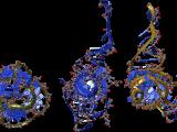 EMD-1524.map-14