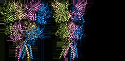 пирацетам, ampa рецептор