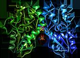 рацетамы и AMPA-рецептор