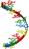 рнк, синтез белка картинки