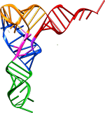 трнк, синтез белка картинки
